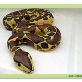 311. Had – marcipánový modelovaný 3D dort